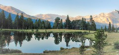 Morning Meadow (Spebak) Tags: norcal california summer 2016 spebak jsbcv canon canon30d canondslr serene morning mountasins trees reflection water pond lake landscape mountains blue sky grass yosemite nationalpark