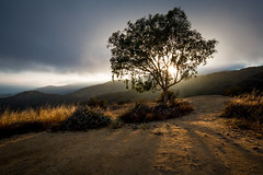 That Tree at the Top (Kevin Dinkel) Tags: shadow landscape sunset dinkel outdoor light simple coastline tree travel photography kevin sunstar lonely sky coast clouds lone