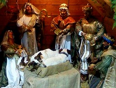 IMG-20130104-WA0002 (Winter Ghosts) Tags: christmas dogs jack crib manger russells wisemen