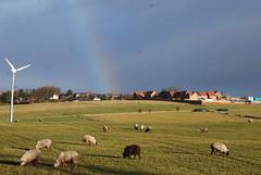 Farmland and Rainbow...... (Halliwell_Michael ## More off than on this week #) Tags: winter rainbow sheep farm farmland westyorkshire 2012 scholes brighouse nikond40x