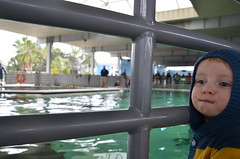 (annie schiller) Tags: aquarium marine aqua florida center research sarasota motemarine researchcenter mote labratory