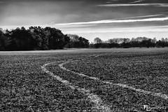 Der Weg des Bauern