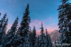 Morning Light (Mark Griffith) Tags: winter light dawn washington glow snowshoeing i90 snoqualmiepass commonwealthbasin dawnpatrol 3stars20130112dsc7585