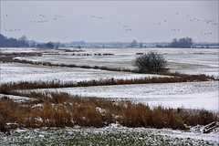 Winter in the floodplains (Foto Martien) Tags: winter snow holland bird netherlands dutch river geese sneeuw nederland goose gans ganzen migration rhine geotag dieren ijssel veluwe vogel dutchlandscape a77 uiterwaarden gelderland rivier leuvenheim brummen geotagging uiterwaard floodplain luchte vogeltrek gelderslandschap geldersetoren spankeren rijndelta nederlandslandschap flussaue rhinedelta overstromingsvlakte martienuiterweerd carlzeisssony1680 bestcapturesaoi martienarnhem gelderseijssel mygearandme mygearandmepremium mygearandmebronze mygearandmesilver mygearandmegold mygearandmeplatinum mygearandmediamond fotomartien slta77v sonyalpha77 geotaggedwithgps photographyforrecreationclassic