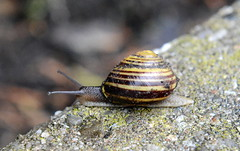 (Life on) the edge ! (HansWobbe) Tags: snail snailrace frhwo frhwofavs