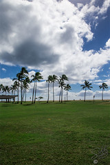 140887_Jan13_X80P8490 (ab_shooter) Tags: grass hawaii palmtree ewabeach ewabeachpark