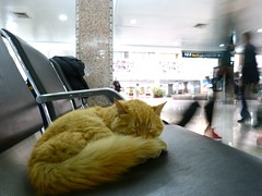"Gatita en aeropuerto Marrakech • <a style=""font-size:0.8em;"" href=""http://www.flickr.com/photos/92957341@N07/8457687641/"" target=""_blank"">View on Flickr</a>"