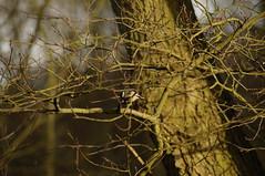 DSC00531 (diervilla) Tags: trees winter birds sony tamron askhambog yorkshirewildlifetrust slta37