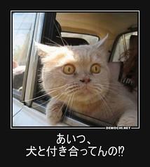 あいつ、 犬と付き合ってんの⁉ #ペット #猫 #病院 (Demochi.Net) Tags: life cute sexy japan fun japanese motivator culture 日本 ペット 猫 demotivator 金 家族 結婚 ゲイ 女 子供 おっぱい 愛犬 政治 社会 巨乳 文化 眼鏡 教育 demotivators 経済 女性 初恋 r18 女子 カップル 子猫 女装 お笑い motivators 会社 少子化 企業 ユーモア 恋 悪い 格差 風刺 一言 デモチ 大喜利