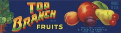 Top Branch Fruits (Jon Williamson) Tags: food history illustration vintage advertising label ad advertisement labels crate fruitcrate vintascope