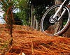 inspiraçao (Fabiano Bulow) Tags: bike cores natureza quentes