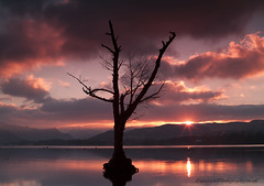 Ullswater 1/4 (wazimu0) Tags: pink sunset red sky lake reflection tree water clouds canon reflections 50mm landscapes f14 branches lakedistrict erosion cumbria 1ds penrith ulls mkii ullswater pooleybridge