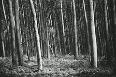 Lean (explored) (.monodrift) Tags: trees bw forest woods nikon hill crooked slanted lean
