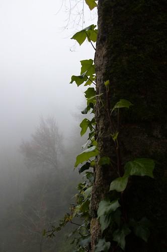 Magic forest ©  Still ePsiLoN