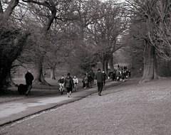 A walk in the park (Steve.T.) Tags: park winter blackandwhite tree grass mono fuji path walk stroll essex chelmsford hylandspark hylandshouse hs10 ommot