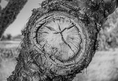 time... (Paco Espinoza | Photographer) Tags: old naturaleza abstract nature sonora mxico season francisco time pair watch sierra muerte reloj monte rolex choya espinas espinoza fotoarte 3ofakind acehigh flickrfriday cajeme 2pair impressedbeauty franciscoespinoza pacoespinoza visitingmexico pacoespinozacom