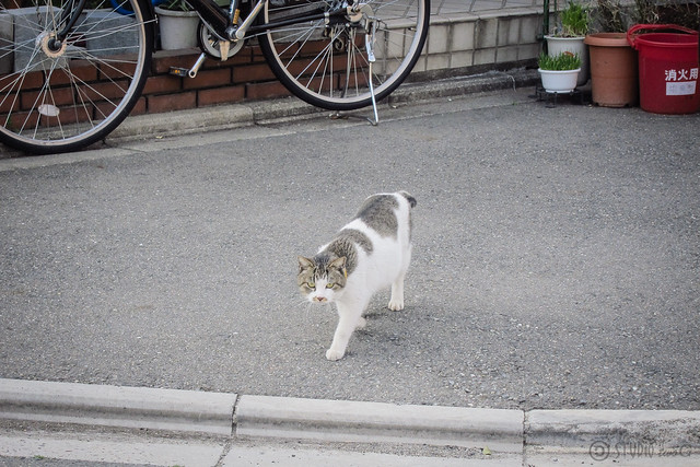 Today's Cat@2013-03-02