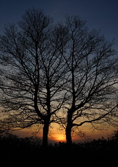Branching out (Andy Coe) Tags: trees winter sunset sky sun colour silhouette sony south yorkshire alpha setting rotherham a77 rawmarsh