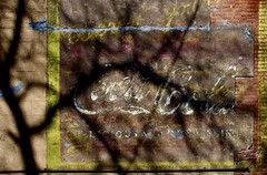 Coke in the Alley (StephenReed) Tags: trees abstract art advertising shadows abstractart weathered cocacola nikond80 stephenreed cokeinthealley