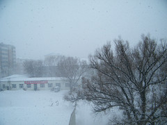 a late spring snow in 2013 for covering the dirt. ... (dabbog) Tags: life god dream son yukiko asoh