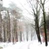 BlizzArt... (Zino2009 (bob van den berg)) Tags: road trees winter cold holland ice nature forest bomen wind sneeuw nederland silhouettes freezing natuur windy temperature wintertime blizzard wald weg endless koud ijskoud snowdunes colmschate bobvandenberg zino2009 minus1010