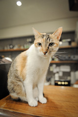 DSC_7770 (aria0831) Tags: cat   minimalcafe