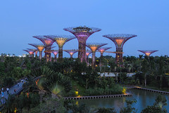 Supertree Grove (chengkiang) Tags: twilight singapore dusk marinabay gardensbythebay dragonflylake supertrees dragonflybridge supertreegrove