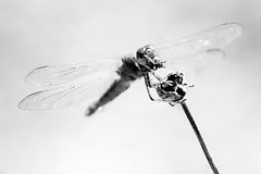 It's a Dead Man's Party (JsonR) Tags: delete5 skull delete2 dragonfly delete7 delete3 delete save roundone insectmacro deletedbythedeletemeuncensoredgroup delete4forcrick dmuthrowdown delete6forassumulator