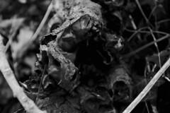 DSC_0693 (dan-morris) Tags: wood sunset white black tree green wet field grass forest photo leaf moss spring nikon shoot berries bokeh bark dew 1855mm dslr depth vr damp f3556g 1855mmf3556gvr d3100