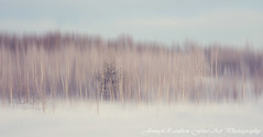 Pearly Winter. Impressionism (Jenny Rainbow) Tags: wood winter snow blur digital forest painting way nikon purple poetic journey impressionism pearly impression impressionistic fineartphotography paintingeffect lyrical winterwood winterforest d700 impressionismphotography jennyrainbowartphotography winterpoesy