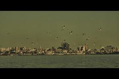 Gaviotas de la bahía (wesp2011) Tags: city seagulls canon uruguay bay gulls gaviotas bahía 550d t2i ciudadmontevideo