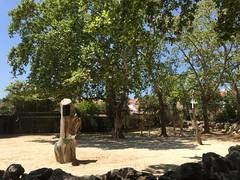 Girafe -Parc zoologique de lisbonne (stefff13) Tags: parc zoologique zoo lisbonne animaux animals portugal girafe