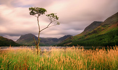 Buttermere (Andy Watson1) Tags: buttermere fleetwith pike high haystacks tree long exposure mountain mountains grass lake district national park cumbria lakedistrict nationaltrust light lighting summer july travel trip clouds slopes mountainous landscape view scenery scenic countryside canon 70d sigma england english uk united kingdom great britain british