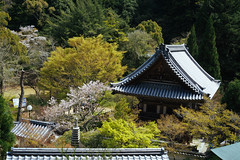 Arriving at Daisho-in (tiagoalexandresilva) Tags: asia honshu japan sonya6000 hiroshima miyajima itsukushima