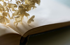 Quiet Study (Captured Heart) Tags: quiet quietmoment simple hydrangea book flowers pages