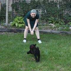 Joy (m.gifford) Tags: tibi whoodle puppy ourpuppy hazel