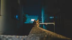 Day1 (stanley yuu) Tags: cat japan day1 gr animal 28mm osaka