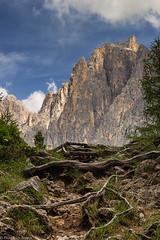 Le radici del Catinaccio (cesco.pb) Tags: valdifassa dolomiten dolomiti dolomites alps alpi catinaccio radice trentino trentinoaltoadige canon canoneos60d tamronsp1750mmf28xrdiiivcld italia italy montagna mountains