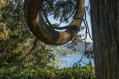 Orta 2106-23 (riccardo.bordese) Tags: piemonte piedmont lago ortasangiulio summer vacation holiday romantictrip