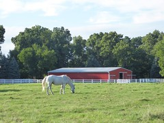 A lovely evening (Philosopher Queen) Tags: horse field farm evening indiana howe whitehorse bucolic