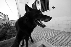 My Dogs selfie (paulo_1970) Tags: paulo1970 canon7d canon canon1022mmf3545 co dog fox selfie