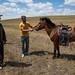 Cavalos ainda ariscos