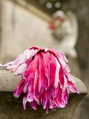 Dulce lazo entre la vida y la muerte (AndreaRodriguezPh) Tags: foto muerte vida historias tiempo