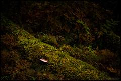 Mossa (Jonas Thomn) Tags: mossa moss ormbunkar ferns ground mark undergrowth undervegetation blad leaves ticka mushroom svamp skog forest hst autumn fall