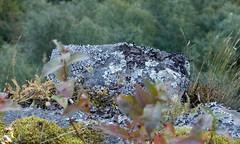 DSC_9424 (devoutly_evasive) Tags: cliff edge rock lichen moss minkmountain forest steep drop