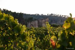 Sambuca di Sicilia (gaiamercury) Tags: sambuca sicilia italia vigna vigne italy sicily nature nikon nikonclubit nikond7200 nikonclub nikonclubitalia nikonlandscape ngc