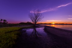 Vicissitude  (kaising_fung) Tags: tree water sea marsh wetland tide