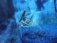 (4_EvER_4_U) Tags: fish mall photography dubai underwater tank creature        flickrandroidapp:filter=none
