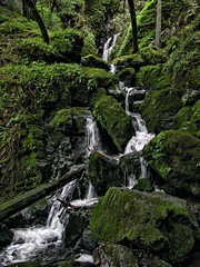 Cataract Creek, Mount Tamalpais State Park (d_silva1) Tags: mounttamalpais stateparks cataracttrail marinhiking