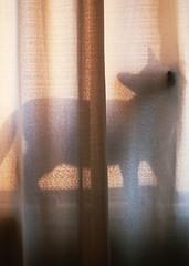 (Alexandra Oln) Tags: window silhouette cat de ventana photography kitten kitty days gato meow silueta shape das gatito fotografa wicho